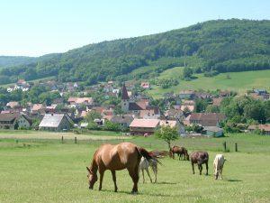 offenhausen_panorama_pferde